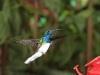 img_2177-kolibri