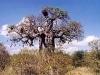 sudafrikapetralutz2