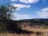 sudafrikapetralutz4