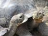 Riesenschildkröten, war Steven Spielberg auch hier?