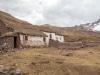 Lama Hirten