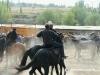 Osh Pferdemarkt