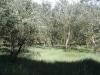 Naturpark Barnim
