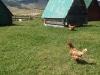 montenegro_2014_s_haubold-43