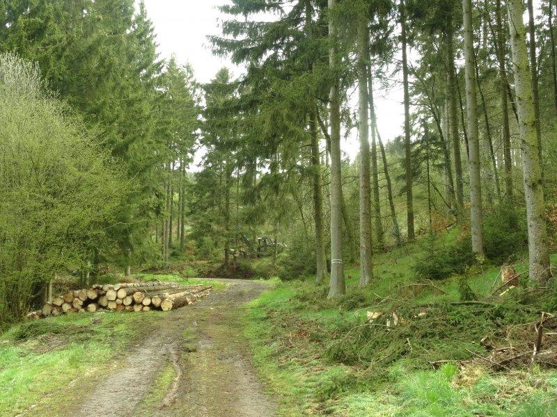 allgegenwärtige Spuren von Forstwirtschaft