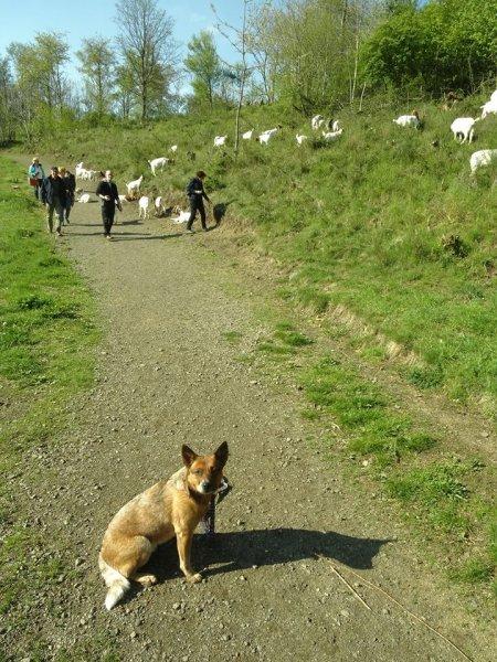Das Viehzeug sorgt für mehr Aufregung beim Hundehalter