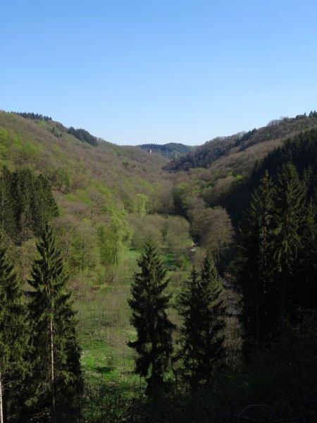 Der Turm der Manderscheider Oberburg ist bereits zu sehen