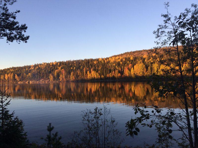 Höga Kusten - rostbraune Wälder im Herbst