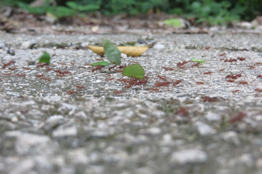 Schwebende Blätter überall