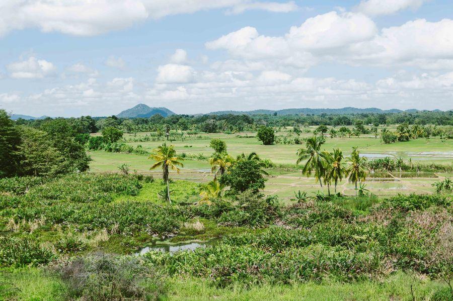 Sri Lanka - wir fahren durch Wälder ins Hochland