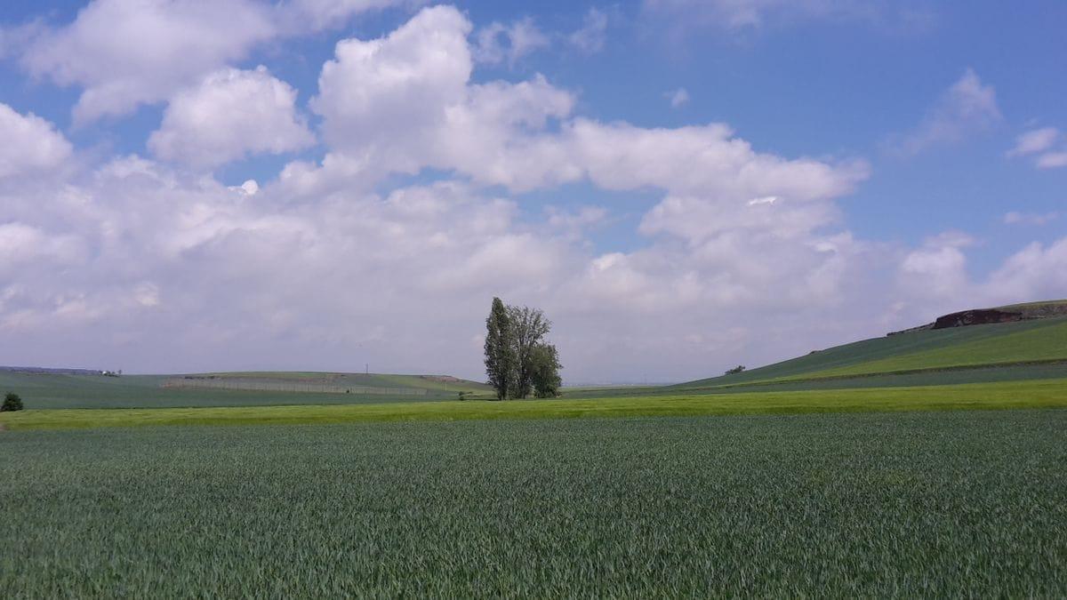 Irgendwann höre ich auf, Bilder von alleinstehenden Bäumen zu machen. Versprochen