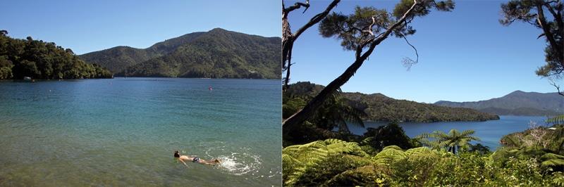 7 Schnorcheln im Queen Charlotte Sound tropischer Sueden