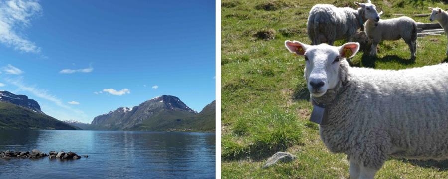 Im See waschen und mit Schafen kommunizieren. Alle Bilder: privat