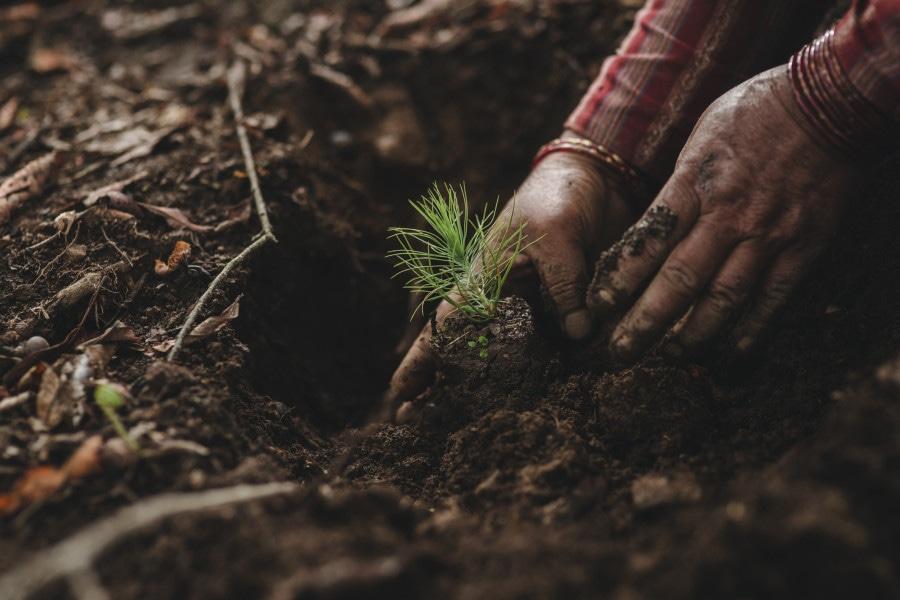 Die Bäume werden sorgsam in die Erde gesetzt