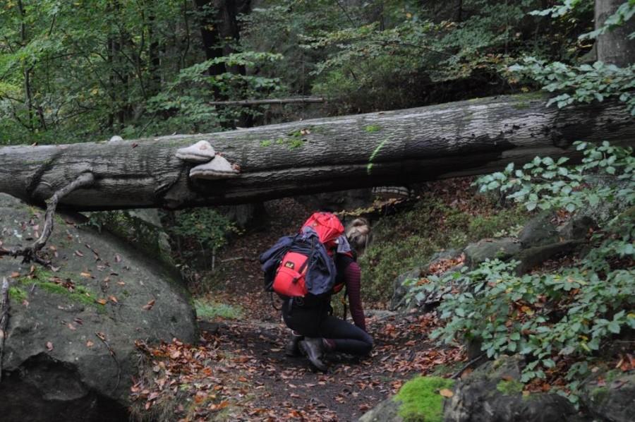 Wer den Forststeig erkunden will, sollte eine gewisse Sportlichkeit mitbringen. Bildquelle: Sachsenforst